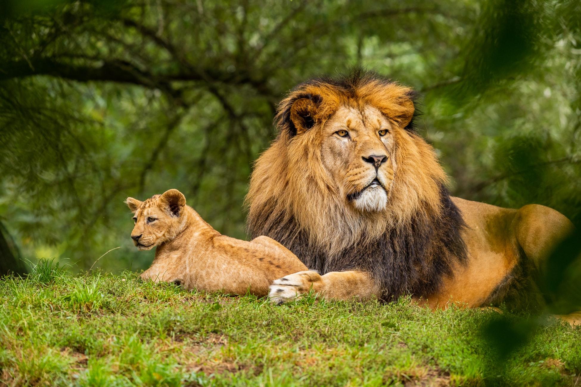 20 de curiozități despre animale de descoperit cu cei mici
